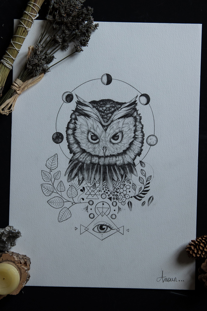 illustrations chouette